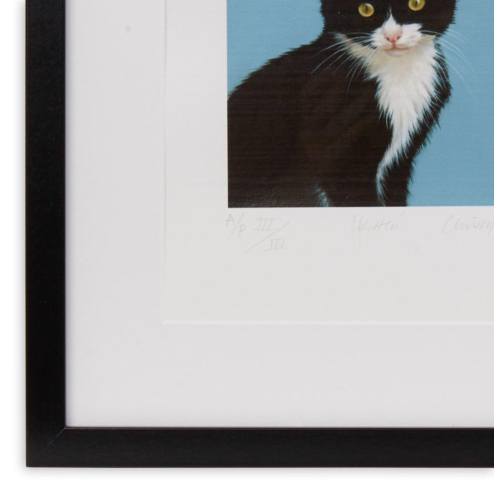 Kitten by Chrissy Wilson Unknown